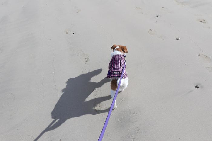 ココモ 海 犬 ペット 散歩
