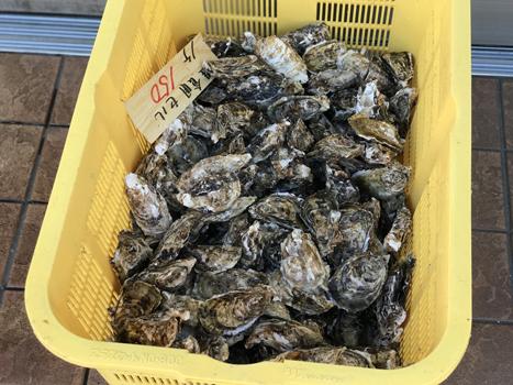 食用セル 牡蠣 殻