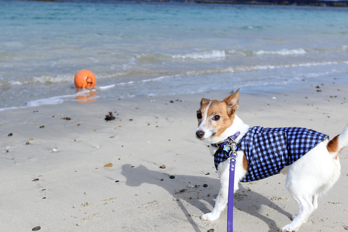 犬 海 浜辺