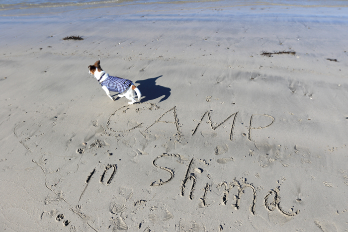 海 ビーチ 犬 ペット