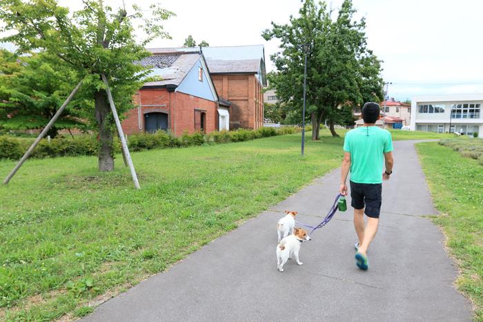0813-2(11)A-Z dog