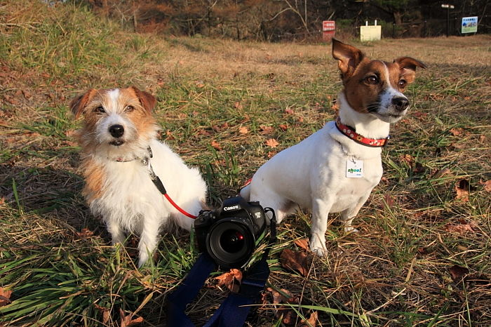 ミューとココモとカメラ
