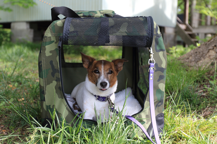 犬キャンプハウスコマンド