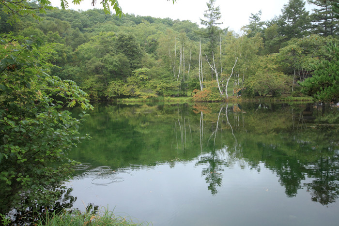pond2 (2)