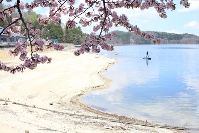 青木湖桜 (5)
