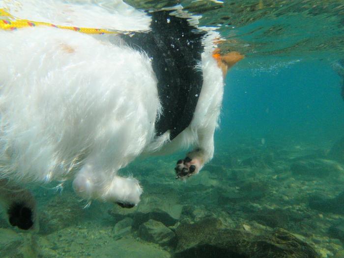 ココモ 泳ぐ