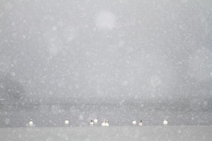 猪苗代湖 (3)