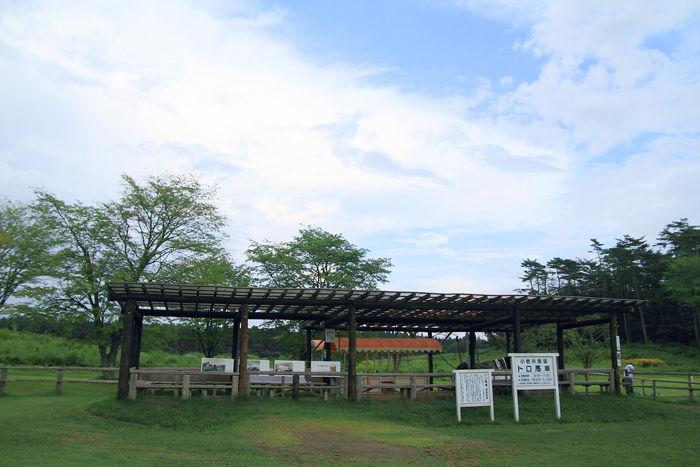 小岩井 (8)