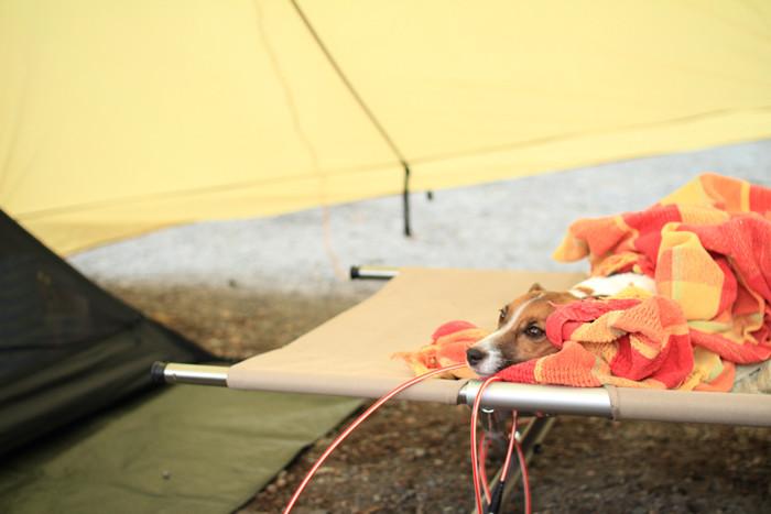 ロングキャンプのコット