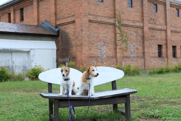 0813-2(12)A-Z dog