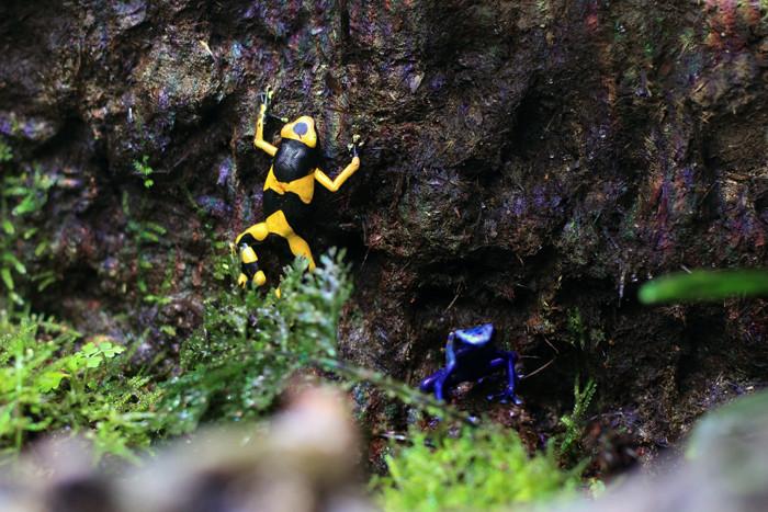 爬虫類 (3)