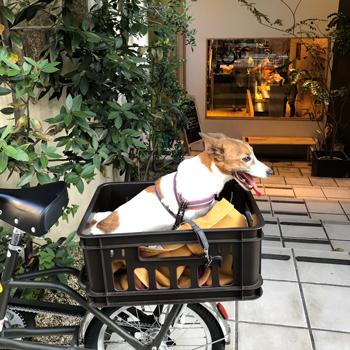 ミュー自転車2