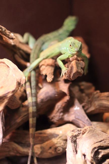 爬虫類 (1)