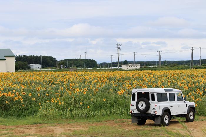 0814-2 (4)ひまわり畑