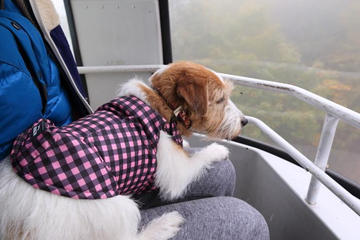奥志賀高原ゴンドラリフト犬ペット