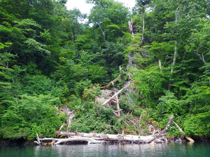 十和田湖カヤック (4)