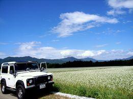 車と蕎麦畑