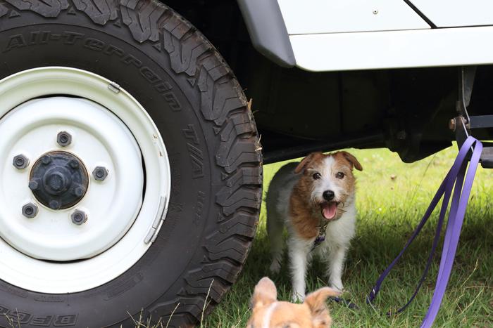 キャンプわんこ犬ミューとココモ (2)