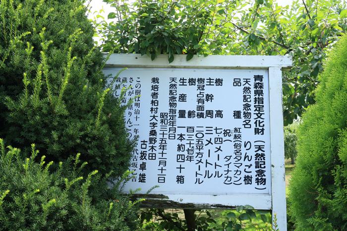 0813 (14)最古のりんごの樹