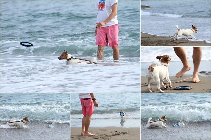 海が好き (8)