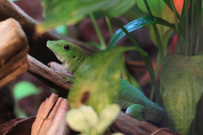 爬虫類 (4)
