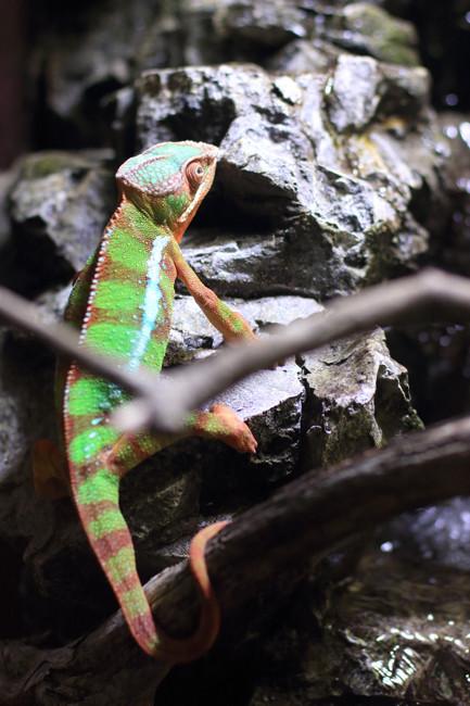 爬虫類 (2)