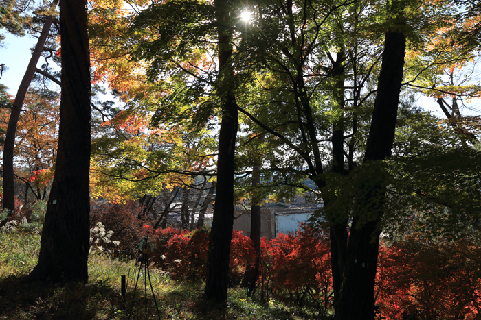 天竜峡紅葉