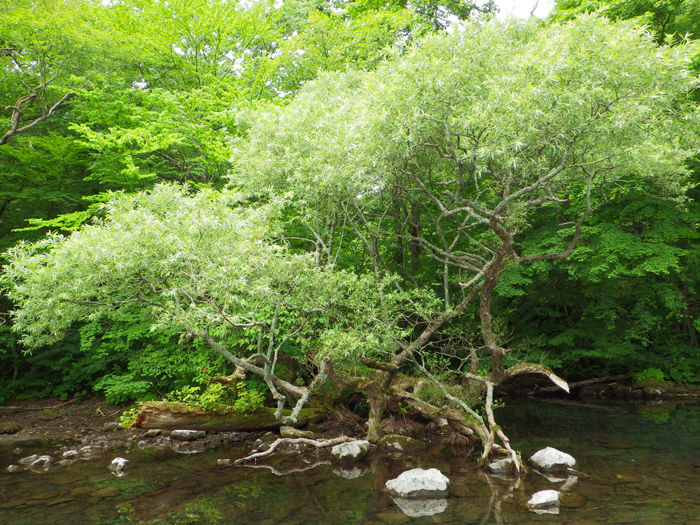 十和田湖カヤック (12)
