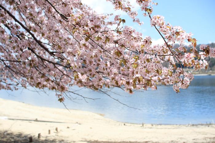 青木湖桜SUP