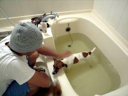 ペットの湯