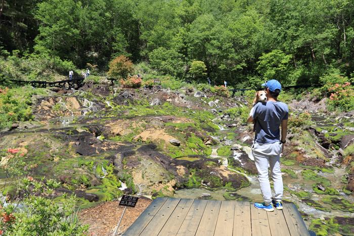 6月チャツボミゴケ公園 (8)