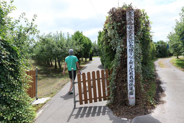 0813 (8)最古のりんごの樹