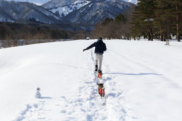 犬と雪遊び (1)