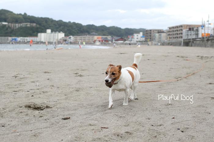 playful (3)