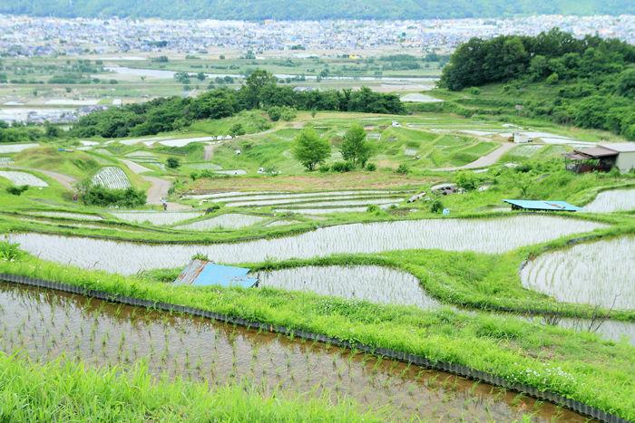 棚田歩き (8)