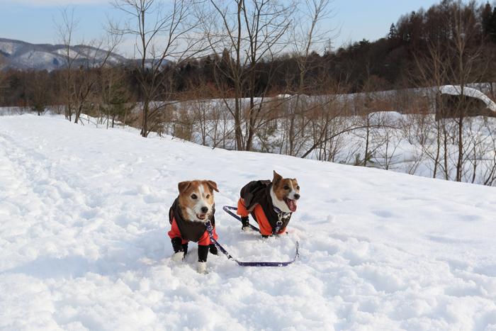 犬と雪遊び (2)