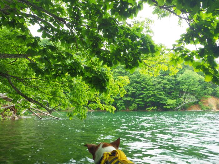 小野川湖ミュー2-2 (1)
