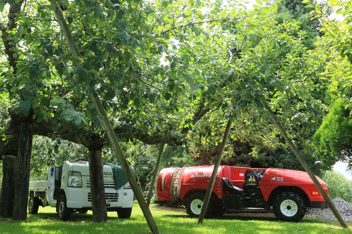 0813 (10)最古のりんごの樹